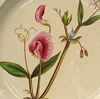 An English Creamware Botanical Plate